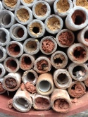 Bee-tubes with bee emerging from centre tube