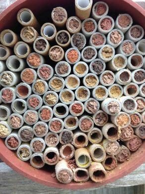 Mason bees' nest