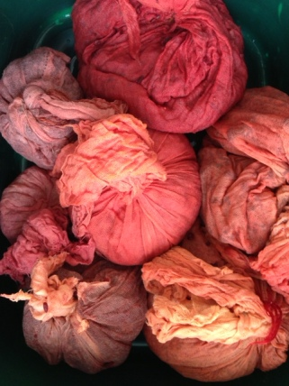 Muslin bags containing boiled madder chips
