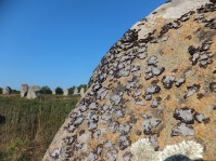 Orchil lichen on stone at Carnac