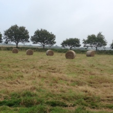 Bales on the moor
